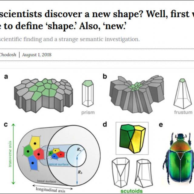 Discovering a New Shape?